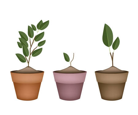 terracotta: Houseplant, Illustration of Three Ornamental Green Trees and Plants in Terracotta Plant Pots for Garden Decoration.
