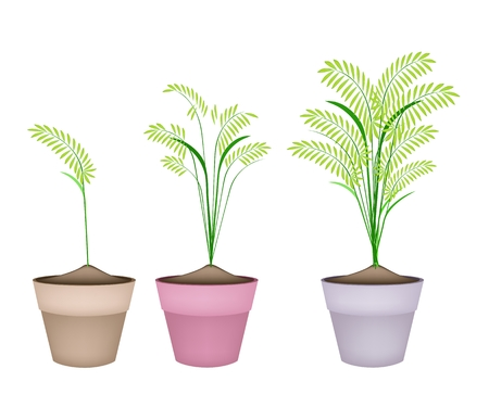 rice paddy: Environmental Concept, Illustration of Beautiful Green Rice, Cereal Plants or Ferns in Ceramic Flower Pots or Clay Plant Pots  for Garden Decoration. Illustration