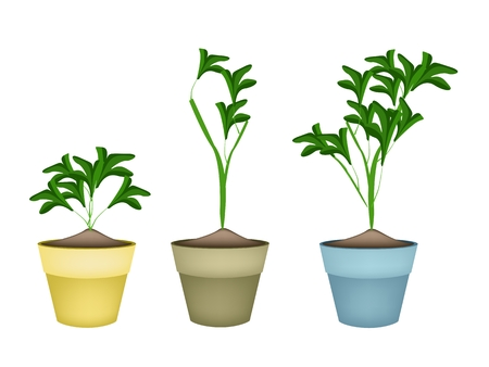 hedge trees: Environmental Concept, Illustration of Fresh Ornamental Green Trees and Plants in Terracotta Plant Pots for Garden Decoration. Illustration