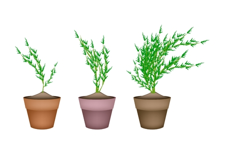 carrot tree: Vegetable, Illustration of Fresh Carrot Tree with Green Leaves in Terracotta Plant Pots for Garden Decoration.