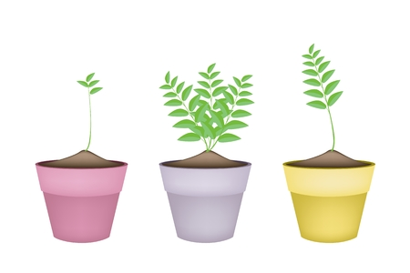 Houseplant, Illustration of Three Ornamental Trees and Plants in Ceramic Plant Pots for Garden Decoration. Vector