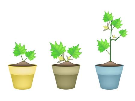 berenjena: Vegetal, Ilustraci�n de berenjena �rbol con flores de color amarillo en macetas de terracota para decoraci�n de jard�n. Vectores