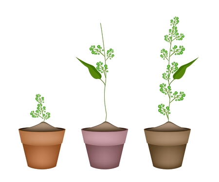 Vegetable and Herb, Illustration of Three Fresh Margosa or Neem Leaves and Blossom in Terracotta Flower Pots Used as Healthy Foods and Herbal Medicines. Vector