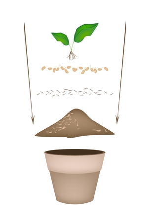potting soil: Tree Planting Steps, Illustration of Ceramic Flower Pots with Potting Soil, Fertilizer, Seeds and Young Tree for Growing Plants, Herbs and Vegetables. Illustration