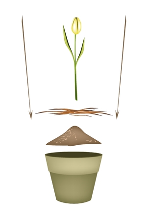 potting soil: Flower Planting Steps, Illustration of Ceramic Flower Pots with Potting Soil, Fertilizer, Seeds and Young Plant for Growing Plants, Herbs and Vegetables. Illustration