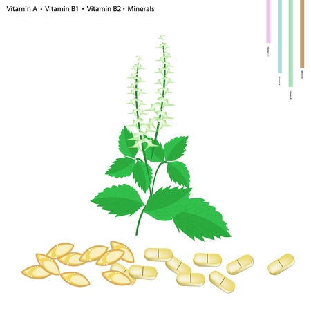 b1: Healthcare Concept Illustration of Holy Basil with Vitamin A Vitamin B1 Vitamin B2 and Minerals Essential Nutrient for Life. Illustration