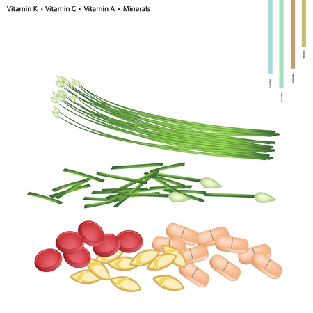 chives: Healthcare Concept, Illustration of Garlic Chives with Vitamin K, Vitamin C, Vitamin A, Folate or B9, Minerals Tablet, Essential Nutrient for Life.