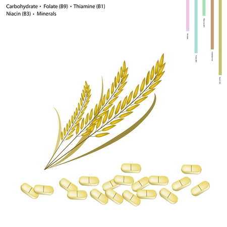 carbohydrate: Healthcare Concept, Illustration of Rice with Carbohydrate, Folate or B9, Thiamine or B1, Niacin or B3 and Minerals, Essential Nutrient for Life.