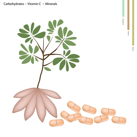 carbohydrates: Healthcare Concept, Illustration of Cassava with Carbohydrates, Vitamin C and Minerals Tablet, Essential Nutrient for Life.