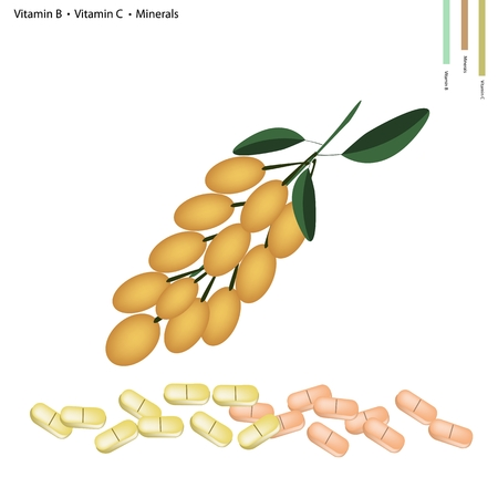burmese: Healthcare Concept, Illustration of Burmese Grape with Vitamin B and Vitamin C and Minerals Tablet, Essential Nutrient for Life. Illustration