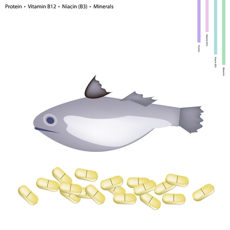 nutrient: Healthcare Concept, Illustration of Fish with Protein, Vitamin B12, Niacin or B3 and Minerals, Essential Nutrient for Life.