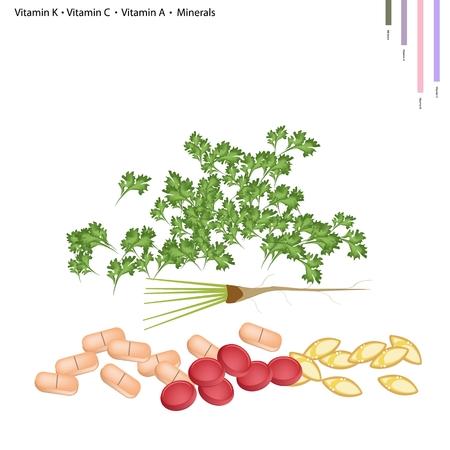 koriander: Egészségügy Concept, Illusztráció koriander K-vitamin, C-vitamin, A-vitamin és ásványi anyagok, esszenciális tápanyag az élet.
