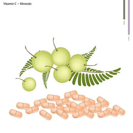 minerals: Healthcare Concept, Illustration of Indian Gooseberry with Vitamin C and Minerals Tablet, Essential Nutrient for Life. Illustration