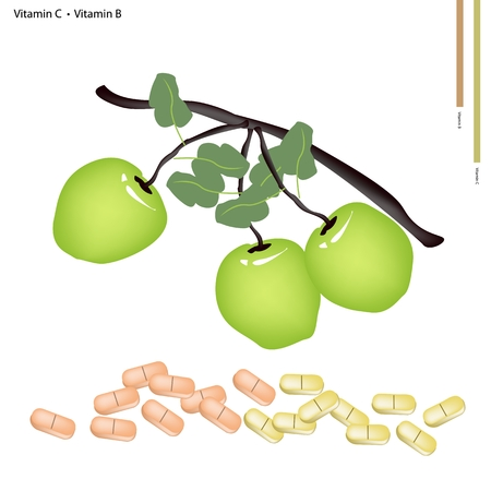 nutrient: Healthcare Concept, Illustration of Apple Fruits with Vitamin C and Vitamin B Tablet, Essential Nutrient for Life.