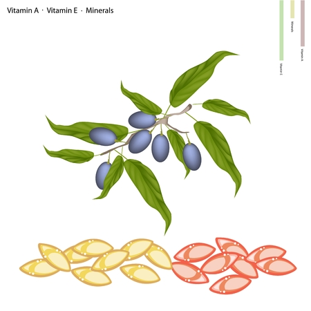 medicament: Healthcare Concept, Illustration of China Olives with Vitamin C, Vitamin A and Minerals Tablet, Essential Nutrient for Life. Illustration
