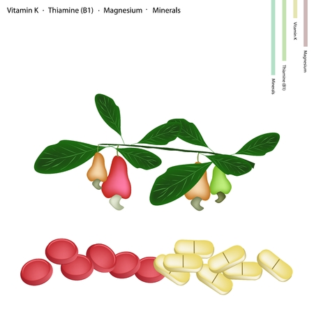 b1: Healthcare Concept, Cashew Nut with Vitamin K, Thiamine (B1), Magnesium and Minerals Tablet, Essential Nutrient for Life. Illustration