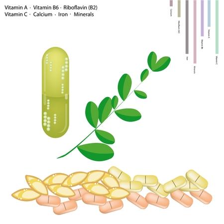 mlonge: Sanit� Concept, Illustrazione di fresche di Moringa Foglie con Vitamina A, Vitamina B6, Riboflavina o B2, vitamina C, calcio, ferro, Minerali, nutriente essenziale per la vita.