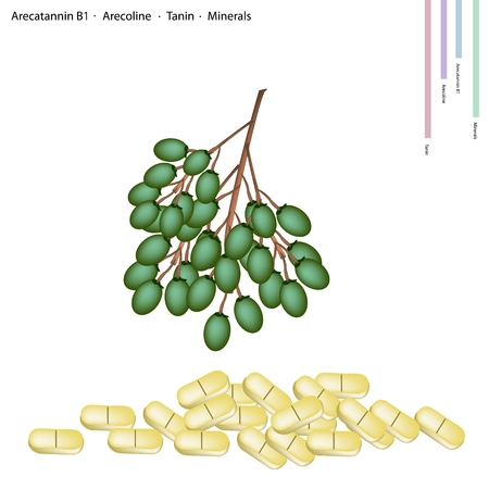 Healthcare Concept, Illustration of Betel Palm Nut or Areca Nut with Arecatannin B1, Arecoline, Tanin and Minerals Tablet, Essential Nutrient for Life. Vector