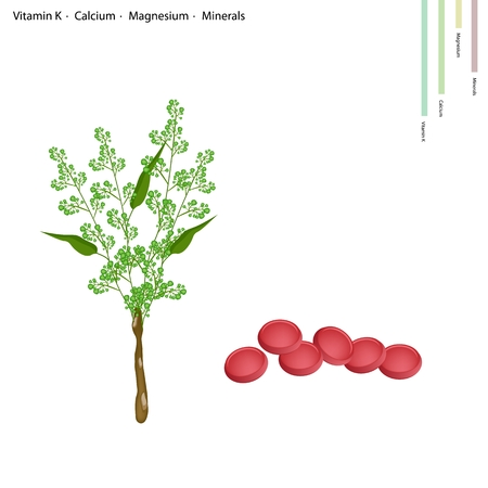 Healthcare Concept, Illustration of Margosa or Neem Leaves and Blossom with Vitamin K, Calcium, Magnesium and Minerals Tablet, Essential Nutrient for Life. Vektorové ilustrace