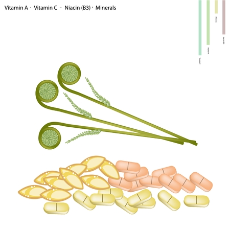 ferns: Healthcare Concept, Illustration of Fiddlehead Ferns with Vitamin A, Vitamin C, Niacin or B3 and Minerals Tablet, Essential Nutrient for Life. Illustration