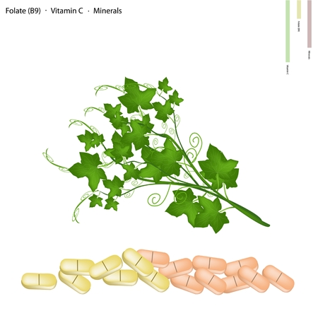 folate: Healthcare Concept, Illustration of Chayote Leaves or Sechium Edule Leaves with Folate B9, Vitamin C and Minerals Tablet, Essential Nutrient for Life.