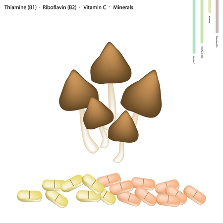 b1: Healthcare Concept, Termite Mushroom or Termitomyces Fuliginosus Heim with Thiamine B1, Riboflavin B2, Vitamin C and Minerals Tablet, Essential Nutrient for Life.