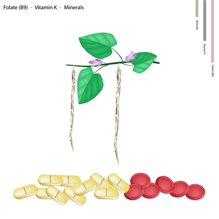 folate: Healthcare Concept, Illustration of Centrosema Pubescens Bean Pods with Folate or B9, Vitamin K and Minerals Tablet, Essential Nutrient for Life.