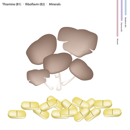 riboflavin: Healthcare Concept, Pleurotus Mushrooms or Oyster Mushrooms with Thiamine B1, Riboflavin B2 and Minerals Tablet, Essential Nutrient for Life. Illustration