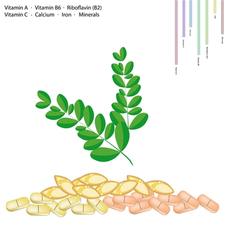 riboflavin: Healthcare Concept, Illustration of Moringa Leaves with Vitamin A, Vitamin B6, Riboflavin or B2, Vitamin C, Calcium, Iron, Minerals, Essential Nutrient for Life. Illustration