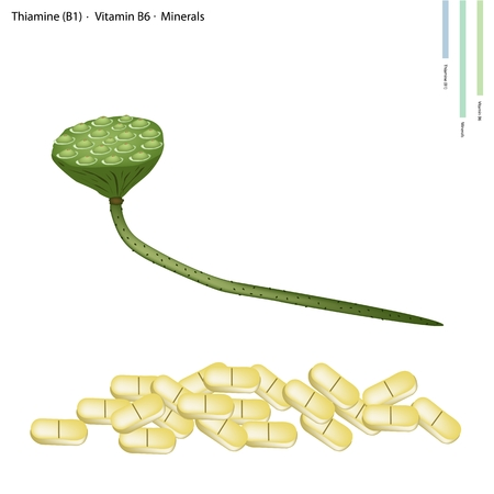 b1: Healthcare Concept, Illustration of Lotus Seed Pods with Thiamine (B1), Vitamin B6 and Minerals Tablet, Essential Nutrient for Life.