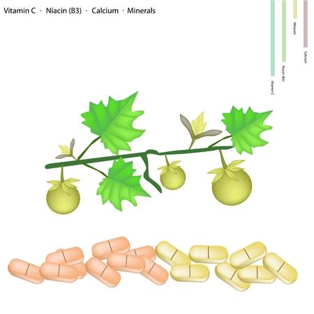 egg plant: Healthcare Concept, Illustration of Solanum Stramonifolium Jacq Fruits with Vitamin C, Niacin or B3, Calcium and Minerals Tablet, Essential Nutrient for Life.