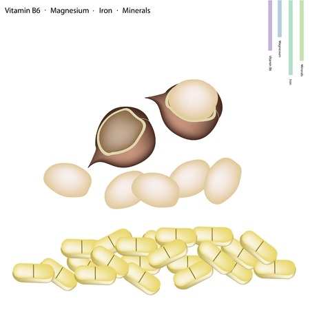 macadamia: Healthcare Concept, Macadamia Nut with Vitamin B6, Magnesium, Iron and Minerals Tablet, Essential Nutrient for Life.