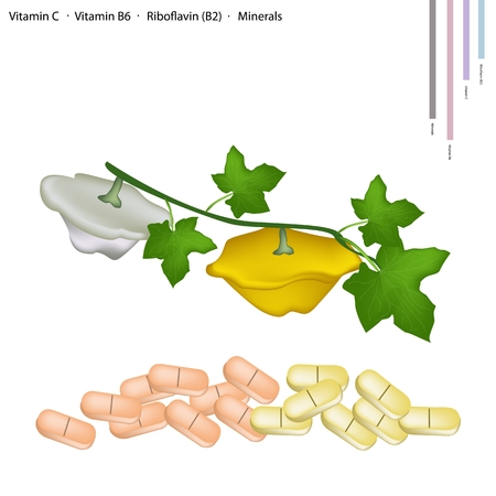 riboflavin: Healthcare Concept, Illustration of Pattypan Squash or Sunburst Squash with Vitamin C, Vitamin B6, Riboflavin (B2) and Minerals Tablet, Essential Nutrient for Life.