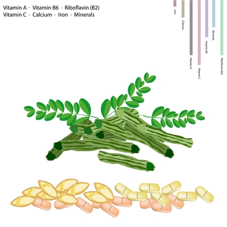 sajna: Healthcare Concept, Illustration of Moringa Pods with Vitamin A, Vitamin B6, Riboflavin or B2, Vitamin C, Calcium, Iron, Minerals, Essential Nutrient for Life.