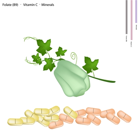 Healthcare Concept, Illustration of Chayote Fruit or Sechium Edule Fruit with Folate B9, Vitamin C and Minerals Tablet, Essential Nutrient for Life.