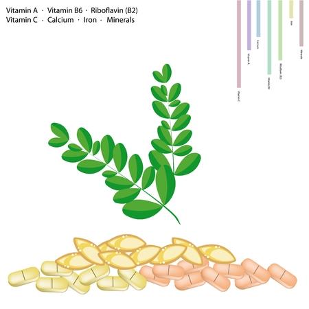 benzolive: Sanit� Concept, illustrazione di Moringa Foglie con Vitamina A, Vitamina B6, Riboflavina o B2, vitamina C, calcio, ferro, Minerali, nutriente essenziale per la vita.