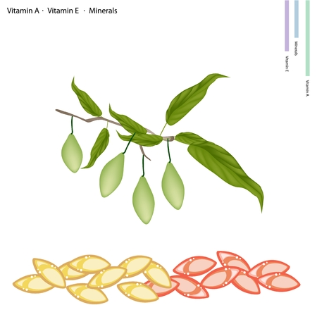 nutrient: Healthcare Concept, Illustration of China Olives with Vitamin C, Vitamin A and Minerals Tablet, Essential Nutrient for Life. Illustration