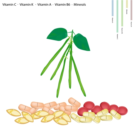 runner bean: Healthcare Concept, Illustration of Green Beans or Phaseolus Vulgaris with Vitamin C, Vitamin K, Vitamin A, Vitamin B6 and Minerals, Essential Nutrient for Life.