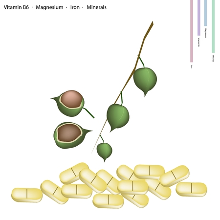 macadamia: Healthcare Concept, Macadamia with Vitamin B6, Magnesium, Iron and Minerals Tablet, Essential Nutrient for Life. Illustration