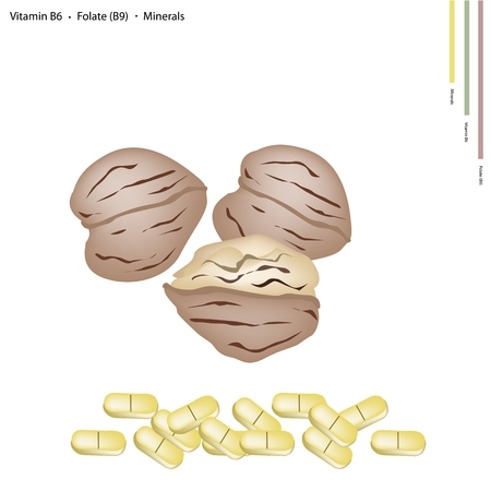 nutshell: Healthcare Concept, Walnuts with Vitamin B6, Folate or B9 and Minerals Tablet, Essential Nutrient for Life.