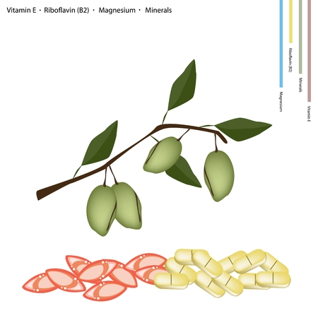 riboflavin: Healthcare Concept, Almond Fruits with Vitamin E, Riboflavin or B2, Magnesium and Minerals Tablet, Essential Nutrient for Life. Illustration