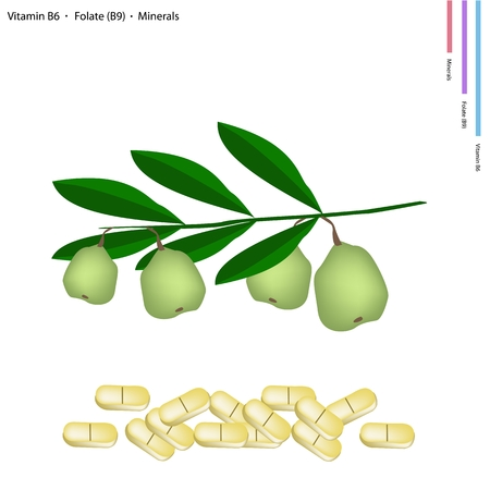 folate: Healthcare Concept, Illustration of Walnuts with Vitamin B6, Folate or B9 and Minerals Tablet, Essential Nutrient for Life.