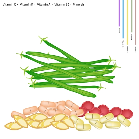 long beans: Healthcare Concept Illustration of Fresh Green Beans or Phaseolus Vulgaris with Vitamin C Vitamin K Vitamin A Vitamin B6 and Minerals Essential Nutrient for Life.
