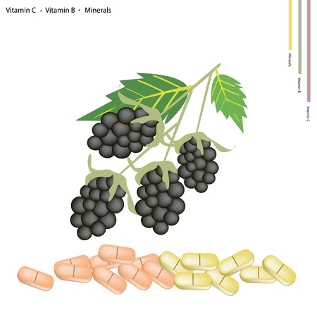 blackberries: Healthcare Concept Illustration of Blackberries with Vitamin K Vitamin B and Minerals Tablet Essential Nutrient for Lift.