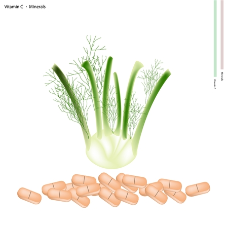 fennel: Healthcare Concept, Illustration of Fresh Fennel with Vitamin C and Minerals, Essential Nutrient for Life. Illustration