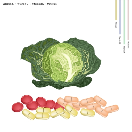 preventative: Healthcare Concept, Illustration of Fresh Savoy Cabbage with Vitamin K, Vitamin C, Vitamin B9 and Minerals Tablet, Essential Nutrient for Life.