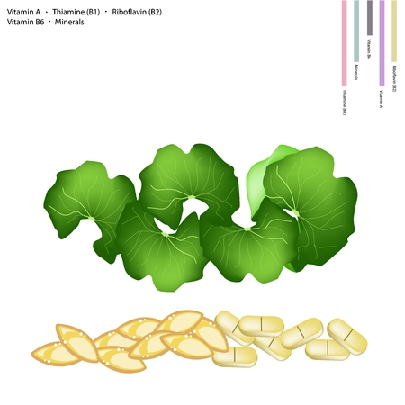 riboflavin: Healthcare Concept, Illustration of Gotu Kola Leaves with Vitamin A, Thiamine B1, Riboflavin B2, Vitamin B6 and Minerals Tablet, Essential Nutrient for Life.