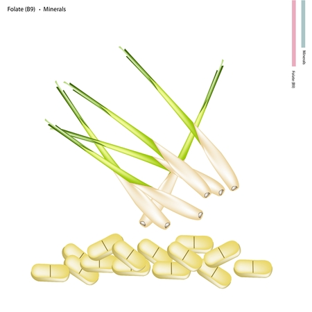 lemon grass: Healthcare Concept, Illustration of Fresh Lemon Grass with Folate or B9 and Minerals Tablet, Essential Nutrient for Life.