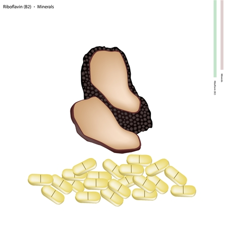 riboflavin: Healthcare Concept, Black Truffle Mushrooms or Lentinula Edodes Mushrooms with Riboflavin or B2 and Minerals Tablet, Essential Nutrient for Life.