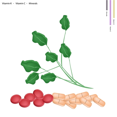 nasturtium: Healthcare Concept, Illustration of Watercress or Nasturtium Officinale with Vitamin K, Vitamin C and Minerals Tablet, Essential Nutrient for Life.